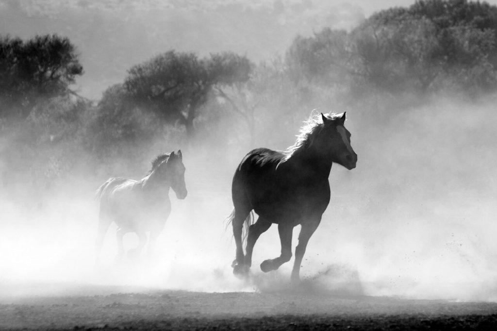 Günstige Pferdehaftpflicht – Versicherungen